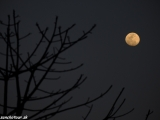 Spln mesiaca v NP Chitwan..