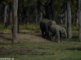 V slonej pôrodnici..