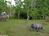Slonie safari a nosorožec...