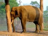 Prvý slon v NP Chitwan...