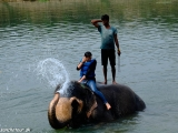 Kúpanie sa zo slonmi...