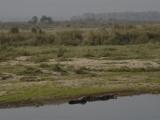 A lovíme krokodíly...