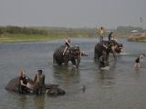 NP Chitwan...