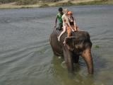 Umývanie slonov...