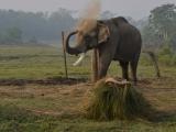 Na slonovi do džungle...