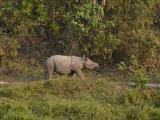Vidíme nosorožca...