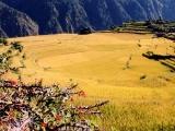 Zelené predhoria Himalájí...