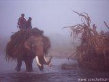 Hmlisté ráno v NP Chitwan...