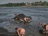 elephant-training-centra-v-kodanade