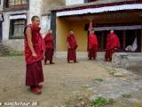 Mnísi...