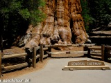 Sequoia Generál Grant, najväčší strom na svete...